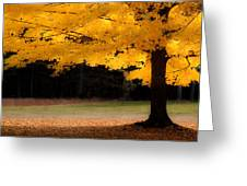 Golden Glow Of Autumn Fall Colors Greeting Card