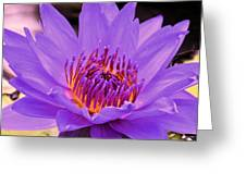 Golden Glow Of The Lavender Lotus Greeting Card