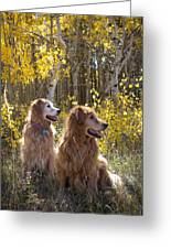 Golden Goldens - Golden Retriever Brothers - Casper Mountain - Casper Wyoming Greeting Card