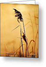 Golden Grain Silhouette Greeting Card