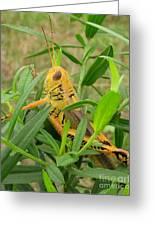 Golden Grasshopper Greeting Card