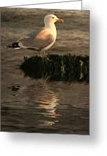 Golden Gull Greeting Card by Sharon Lisa Clarke