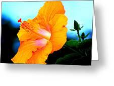 Golden Hibiscus Greeting Card