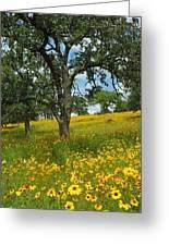 Golden Hillside Greeting Card by Robert Anschutz