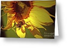Golden Hoverfly 2 Greeting Card