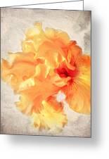 Golden Iris 2 Greeting Card