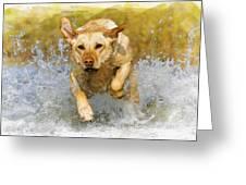 Golden Labrador Greeting Card