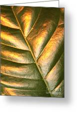 Golden Leaf 2 Greeting Card