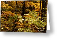 Golden Leaves In Autumn Greeting Card