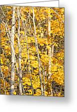 Golden Leaves In Autumn Abstract Greeting Card