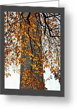 Golden Leaves In Mt Vernon Greeting Card