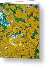 Golden Leaves Of Autumn Greeting Card