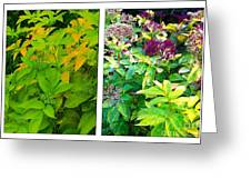 Golden Leaves To Purple Seeds Greeting Card