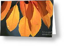 Golden Leaves With Golden Sunshine Shining Through Them Greeting Card