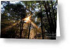Golden Light Greeting Card