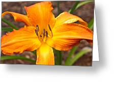 Golden Lilly 2 Greeting Card