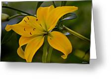 Golden Lily Sway 2013 Greeting Card