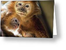 Golden Lion Tamarin Mother And Baby Greeting Card