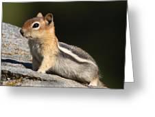 Golden-mantled Ground Squirrel Greeting Card