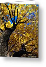 Golden Maple 7 Greeting Card