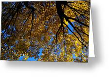 Golden Maple 8 Greeting Card