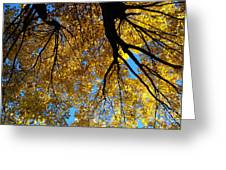 Golden Maple 9 Greeting Card