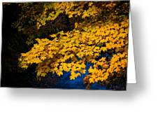 Golden Maples Greeting Card