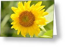 Golden Moment - Sunflower Greeting Card