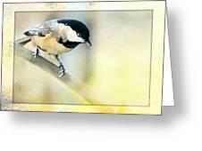 Golden Morning Chickadee Photo Art Greeting Card