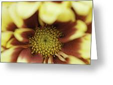 Golden 'mum Greeting Card by Lesley Rigg