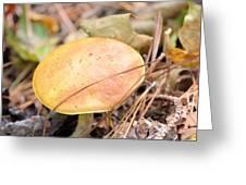 Golden Mushroom Greeting Card