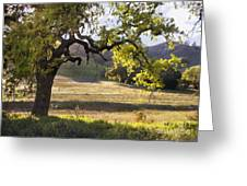 Golden Oaks Greeting Card