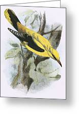 Golden Oriole Greeting Card