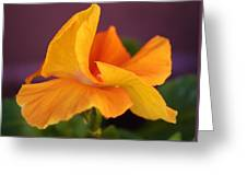 Golden Pansy Greeting Card