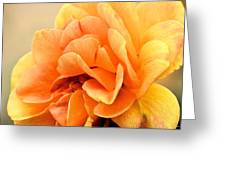 Golden Peach Rose Greeting Card