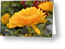 Golden Petals Greeting Card