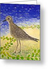 Golden Plover Greeting Card by Anna Skaradzinska