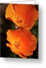 Golden Poppyies Greeting Card by Gilbert Artiaga