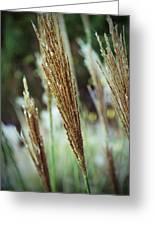 Golden Reeds Greeting Card