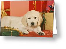 Golden Retriever Amongst Presents Greeting Card