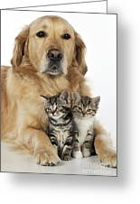 Golden Retriever And Kittens Greeting Card
