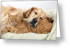 Golden Retriever And Orange Cat Greeting Card