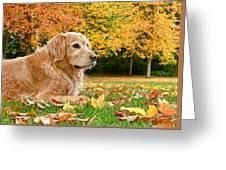 Golden Retriever Dog Autumn Day Greeting Card