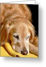 Golden Retriever Dog On The Yellow Blanket Greeting Card
