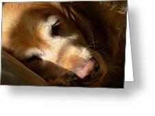 Golden Retriever Dog Quiet Time Greeting Card