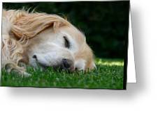 Golden Retriever Dog Sweet Dreams Greeting Card