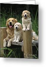 Golden Retriever Dog With Puppies Greeting Card