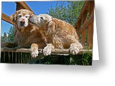 Golden Retriever Dogs The Kiss Greeting Card