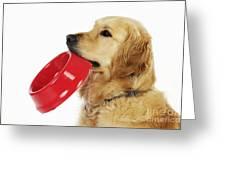 Golden Retriever Holding Bowl Greeting Card