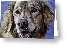 Golden Retriever - Molly Greeting Card